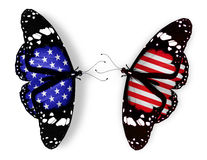 Två amerikanska flagganfjärilar Royaltyfri Bild