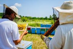 Två apiarists, beekeepers kontrollerar bin på den trähonungskakan Arkivfoton