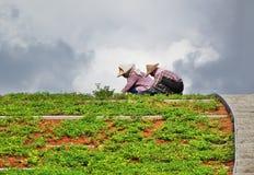 Två arbetare som är upptagna med att landskap Arkivbild