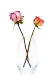 Två av torkade rosor Arkivfoto