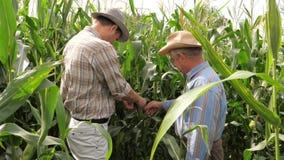 Två bönder i The Field av kontroll för havrejordbruksproduktermajskolv för mognad och status stock video