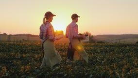 Två bönder man och kvinna promenerar fältet som bär boxas med nya grönsaker Organiskt lantbruk och familj stock video