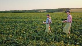 Två bönder med askar av grönsaker promenerar det gröna fältet Familjagribusinessbegrepp lager videofilmer