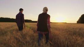 Två bönder promenerar vetefältet in mot inställningssolen beklär barn för kvinna för natur för harmoni för maskrosfältblomning si