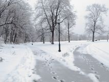 Två banor i snön royaltyfria foton