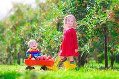 Två barn som spelar i en äppleträdgård Arkivbilder