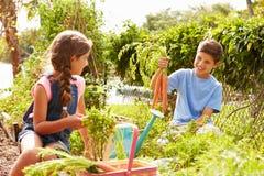 Två barn som tillsammans arbetar på odlingslott Royaltyfria Bilder