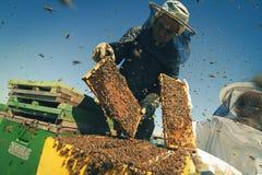 Två beekeepers som kontrollerar honungskakan av en bikupa Royaltyfria Bilder