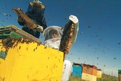 Två beekeepers som kontrollerar honungskakan av en bikupa Royaltyfri Fotografi