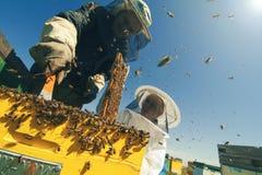 Två beekeepers som kontrollerar honungskakan av en bikupa Royaltyfri Foto
