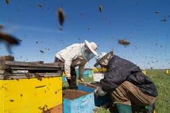 Två beekeepers som kontrollerar honungskakan av en bikupa Arkivbilder