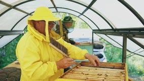 Två beekeepers som kontrollerar ramar och skördar honung, medan arbeta i bikupa på sommardag Arkivbild