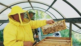 Två beekeepers som kontrollerar ramar och skördar honung, medan arbeta i bikupa på sommardag Royaltyfri Bild
