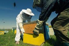 Två beekeepers som lyfter en honungskakaspjällåda Fotografering för Bildbyråer