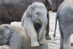 Två behandla som ett barn att spela för elefanter royaltyfria bilder