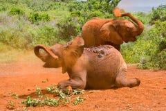 Två behandla som ett barn dammbadning för afrikanska elefanter fotografering för bildbyråer