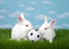 Två behandla som ett barn kaniner med fotbollbollen i gräs royaltyfria foton