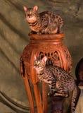 Två bengal katter royaltyfri fotografi