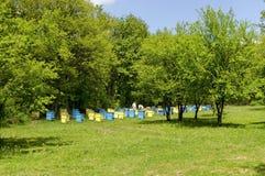 Två bi-förlage skyler in på bikupaarbete bland bikupor Arkivbild
