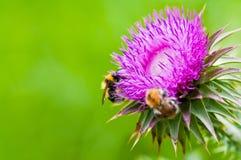 Två biarbetare som arbetar i sommar Arkivfoton
