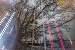 Två bilder som läggas över på de dubbel exponering bilväg och ett stort träd Arkivbild