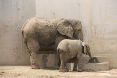 Två biskopar nära ho i zoo Arkivfoton
