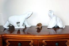 Två björnar och Abyssinian kattunge Royaltyfri Foto