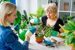 Två blomsterhandlare i ett växthus Royaltyfri Fotografi