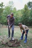 Två bröder en pikjord i en parkera för att plantera det unga trädet Familjarbete, höstdag Royaltyfri Bild