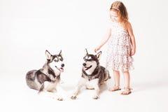 Två broderhuskies och flicka som isoleras på vit arkivbild