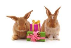 Två bruna kaniner med gåvor royaltyfria bilder