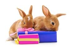 Två bruna kaniner med gåvor arkivbilder
