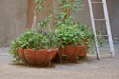 Två bruna vaser för stor sten med dekorativ grön vegetation på grå asfalt mot väggen med en stege fotografering för bildbyråer
