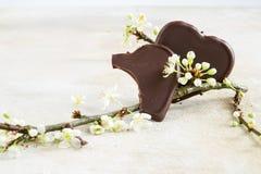 Två chokladhjärtor, en som bitas av, bredvid en blomningfilial, royaltyfria foton