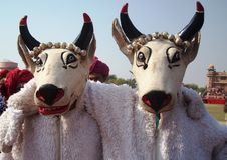 Två dansare i form av tjurar i Rajasthani fotografering för bildbyråer