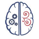 Två delar av den mänskliga hjärnan Arkivbild