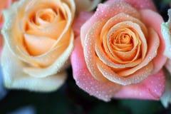 Två delikata rosor med daggdroppar royaltyfri bild