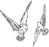 Två duvor Arkivbild