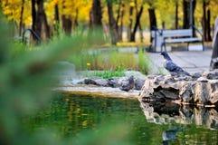 Två duvor badar och spelar i springbrunnen på en solig dag Fotografering för Bildbyråer