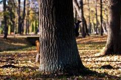 Två ekorrar på det stora trädet Höst Arkivfoto