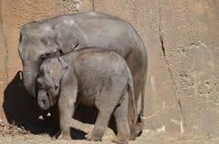 Två elefanter 2 Royaltyfri Fotografi