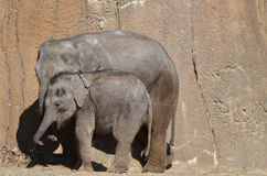 Två elefanter 3 Arkivbild