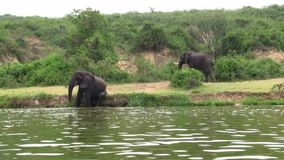 Två elefanter som badar och spelar stock video