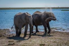Två elefanter som får dammbadet bredvid floden Arkivbilder