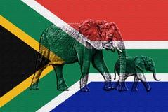 Två elefanter som läggas över på texturerade söder - afrikansk flagga - Royaltyfri Fotografi