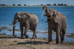 Två elefanter som tycker om gyttjebadet bredvid floden Fotografering för Bildbyråer