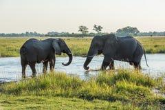 Två elefanter som vänder mot av i den grunda floden Arkivbild