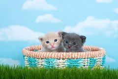 Två en månad gamla kattungar i en vårkorg i högväxt grönt gräs arkivbilder