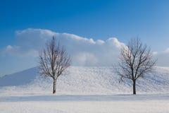 Två ensamma träd i ett vinterlandskap Royaltyfri Bild