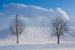 Två ensamma träd i ett vinterlandskap Arkivbilder